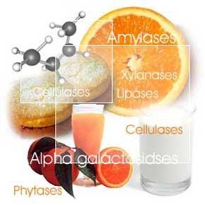 Ензимите - ключът към нашето здраве