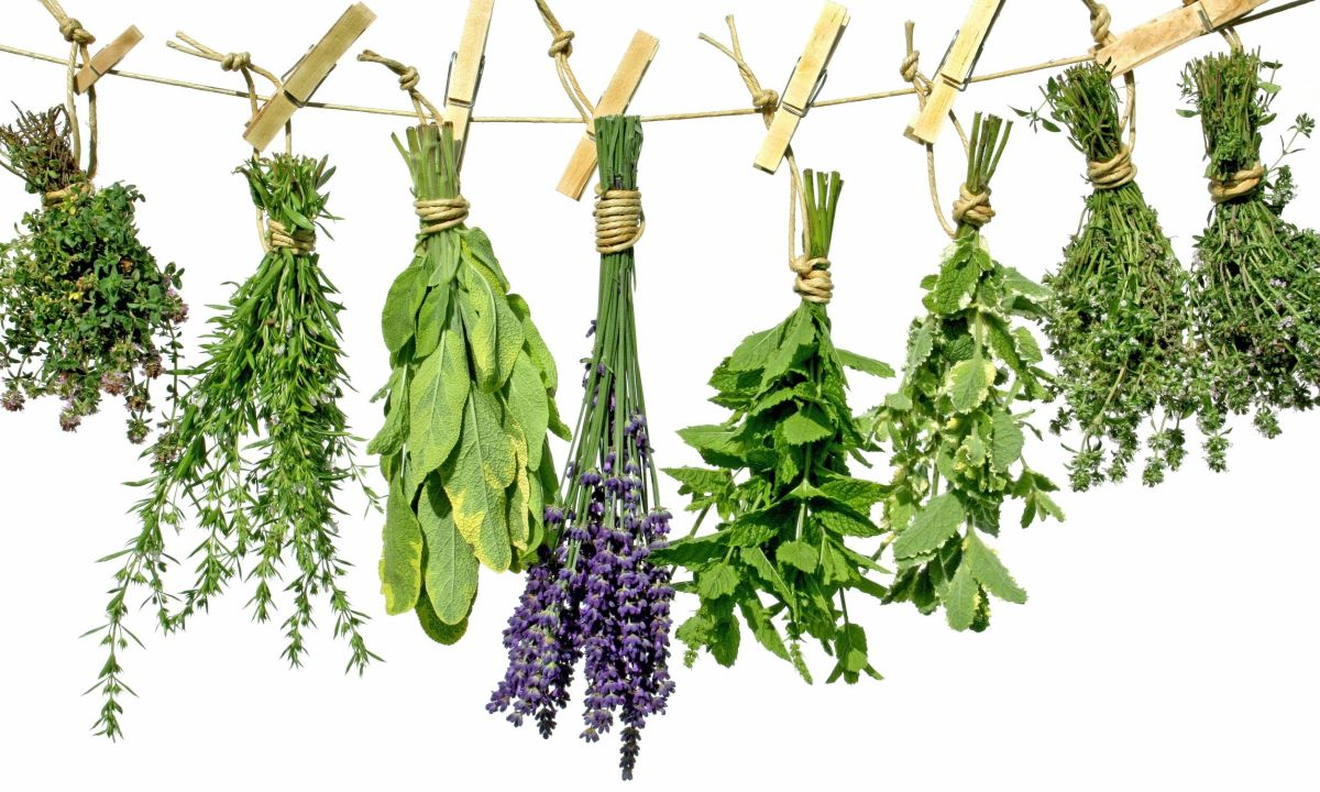 За лечебното действие на билките