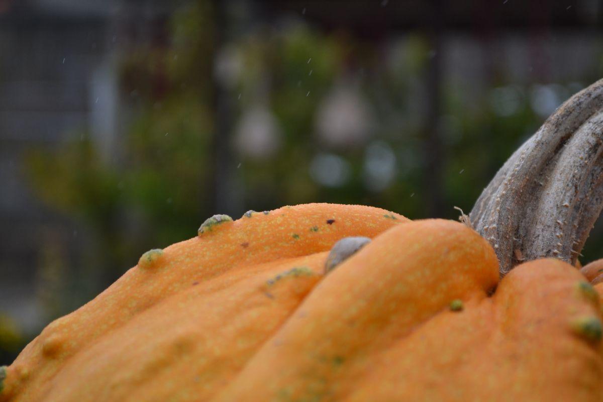 Оранжева тиква